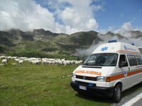 Ambulanze Veterinarie Italia